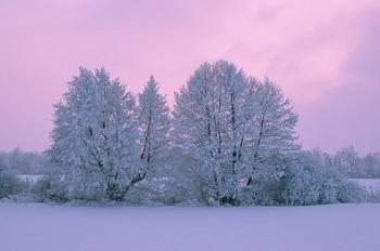 trees-冬 yuki2.jpg