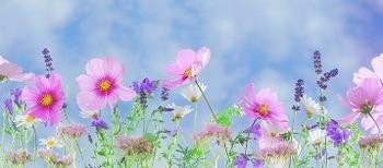wild flowers2.jpg